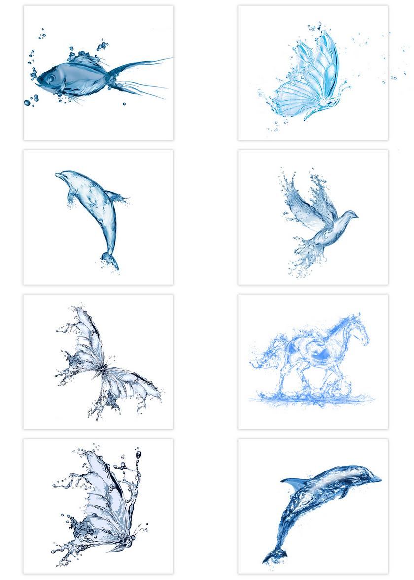 8个水元素生物素材图片