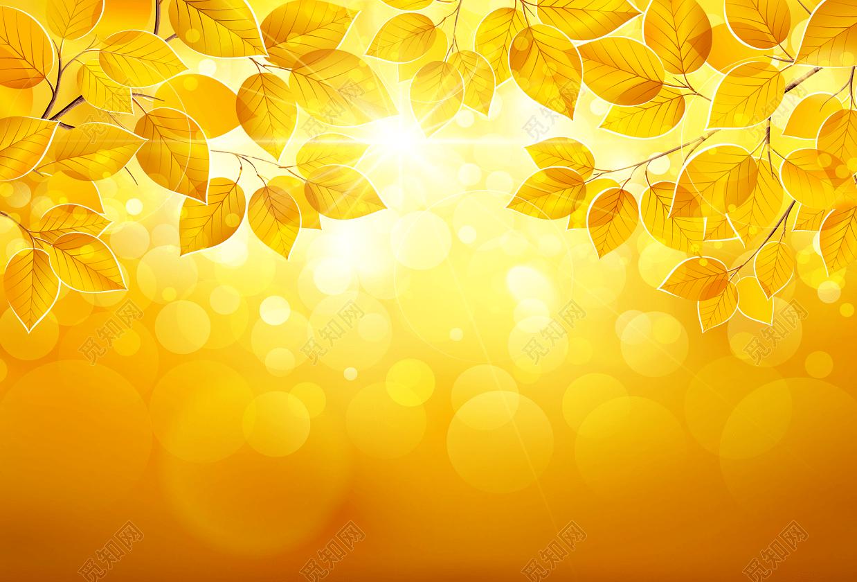 金黄色秋树叶秋季秋天秋分背景图金色