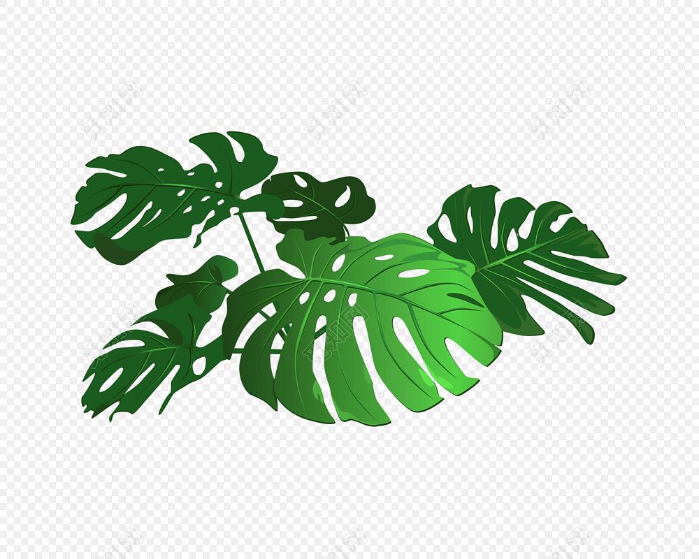 手绘热带植物叶子免费下载_png素材_觅知网