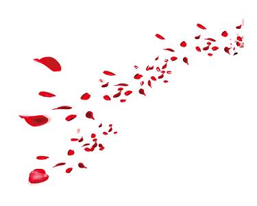 玫瑰花瓣鮮花婚禮婚慶素材