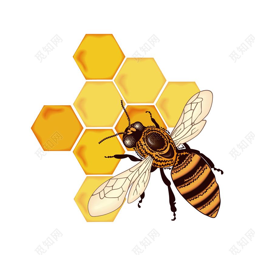 蜂蜜矢量美味蜜蜂素材免费下载_觅知网沧浪美食城亭新天地图片