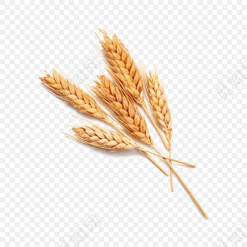 手工麦穗步骤图片作品