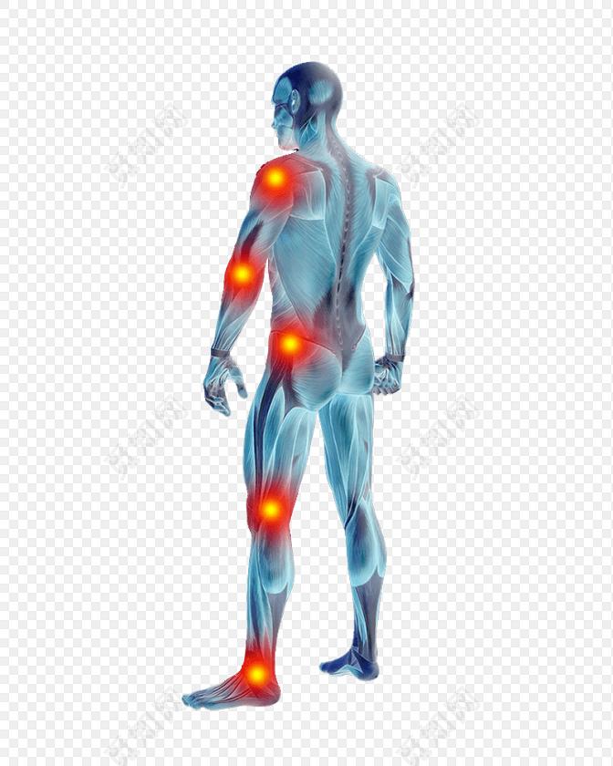 医学专业人体结构关节肌肉素材