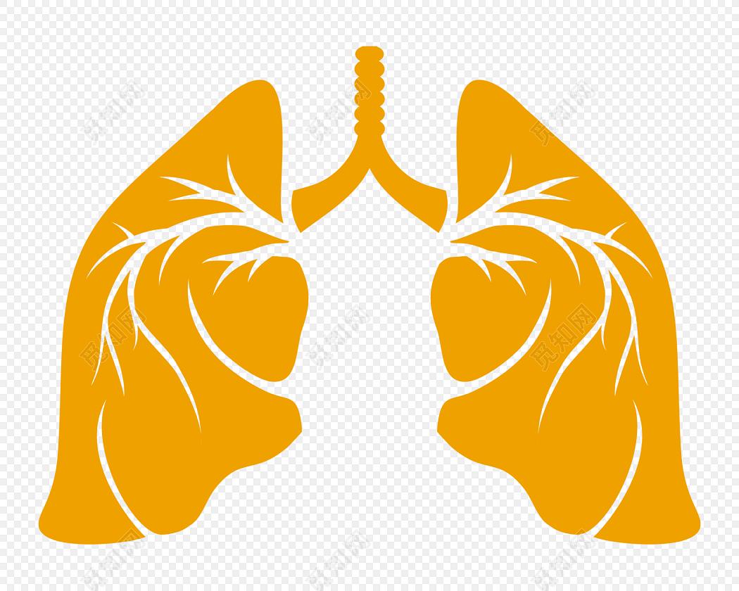 医学专业人体结构肺脏素材