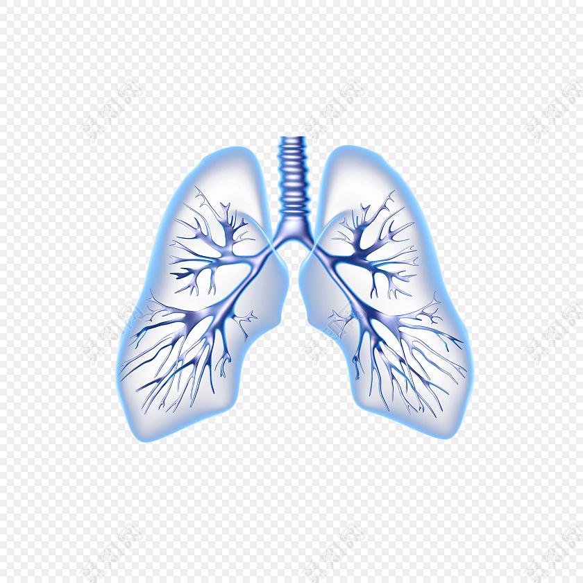 医学专业人体肺脏结构素材