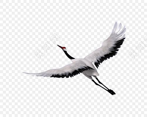 黑白手绘飞翔仙鹤中国风插画