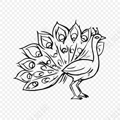 黑白卡通手绘孔雀素材