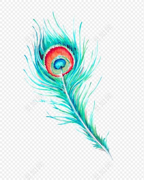 手绘水彩孔雀羽毛素材