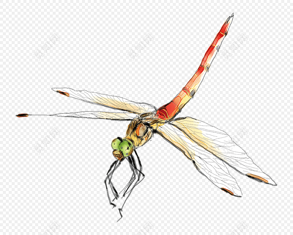 手绘红蜻蜓免抠图素材免费下载_png素材_觅知网