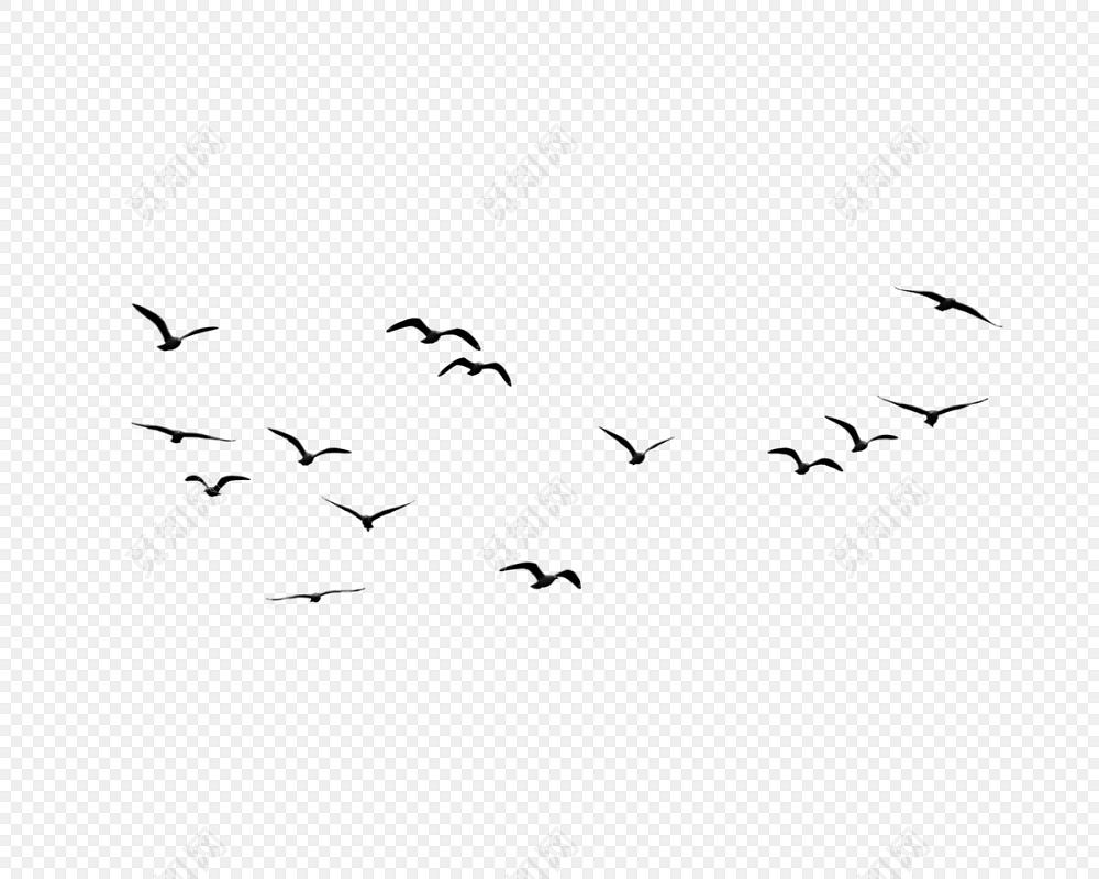 黑色飞鸟剪影设计素材