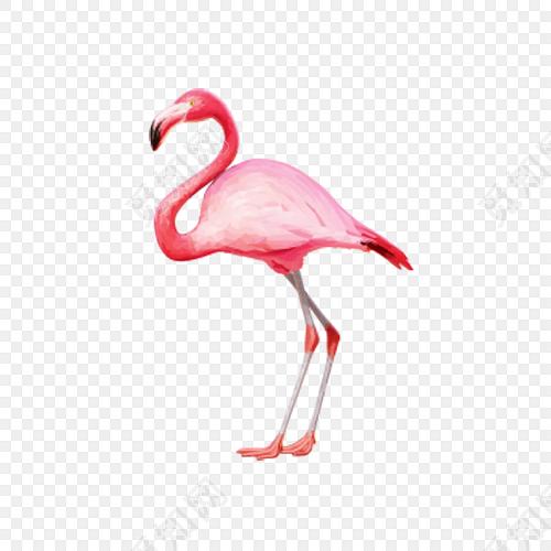 水彩手绘火烈鸟设计素材