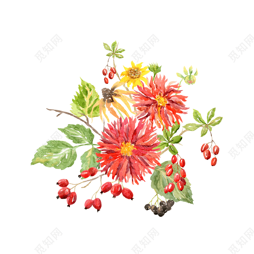 手绘水彩菊花素材