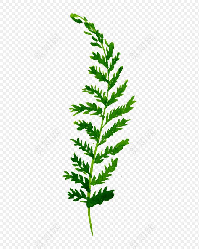 绿色手绘水草水彩插画素材