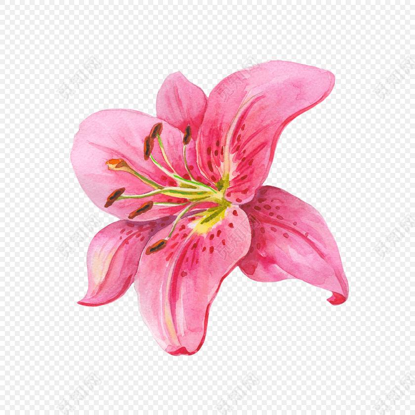 清新手绘粉色百合花设计素材