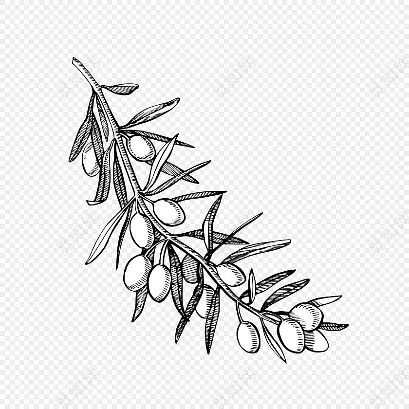 手绘橄榄枝素材