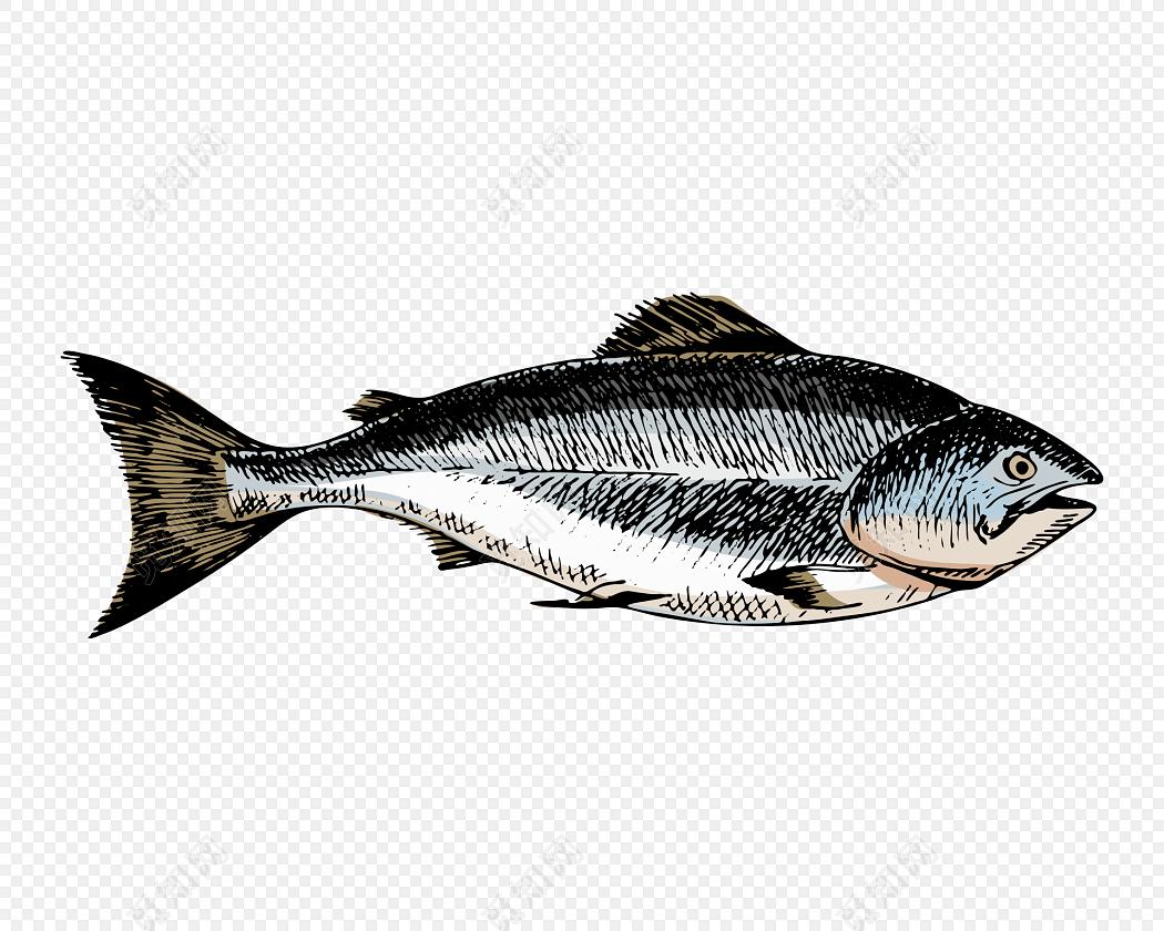 彩色简笔画鱼素材