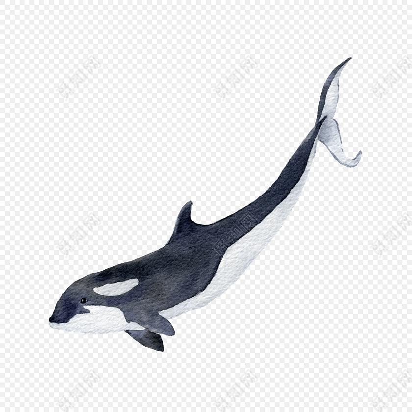 手绘卡通鲸鱼