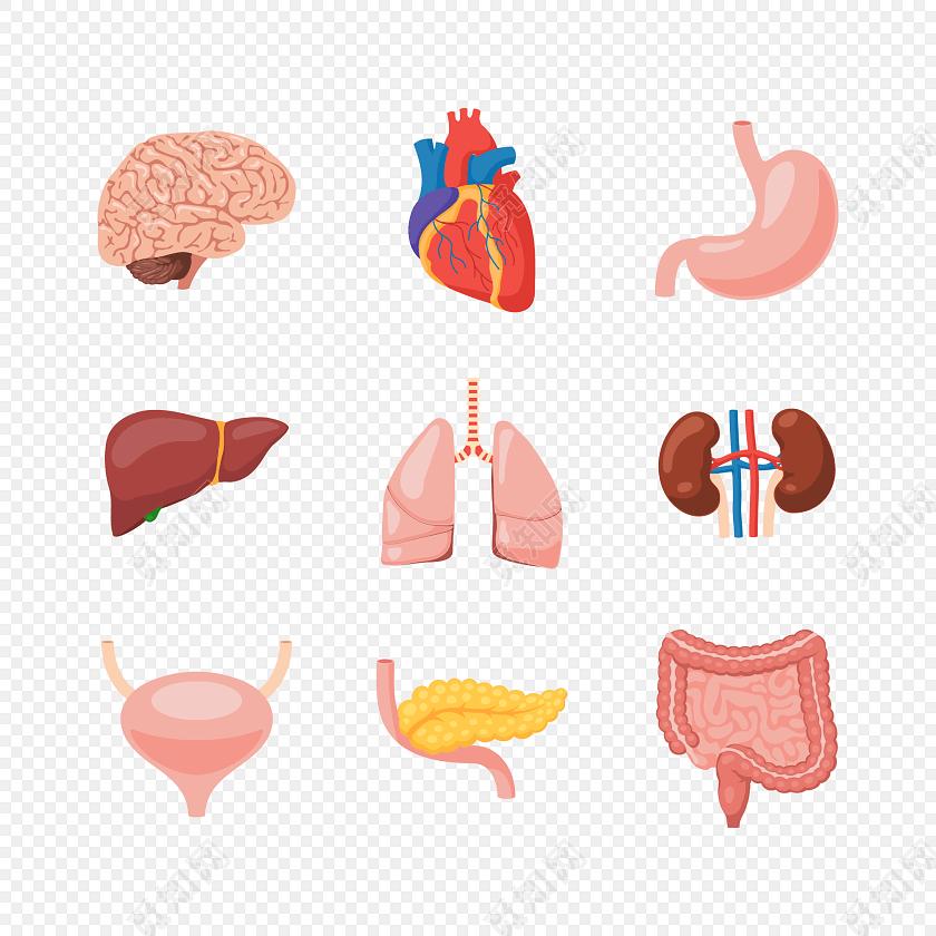png素材卡通人体器官素材标签:医疗 免抠素材 矢量素材 卡通 手绘