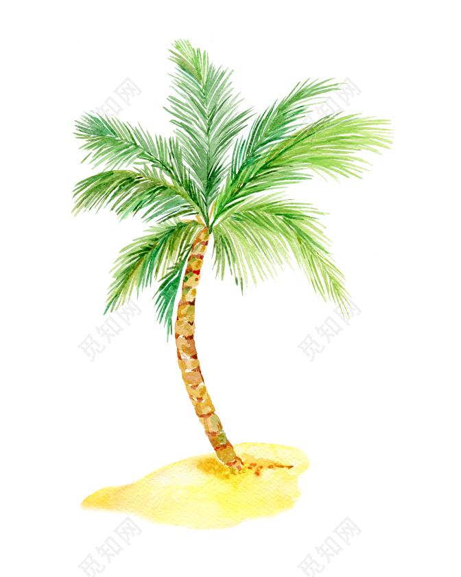 字体椰子树手绘绿色英语书素材v字体图片