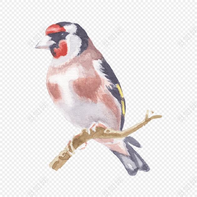 水彩手绘小鸟设计素材