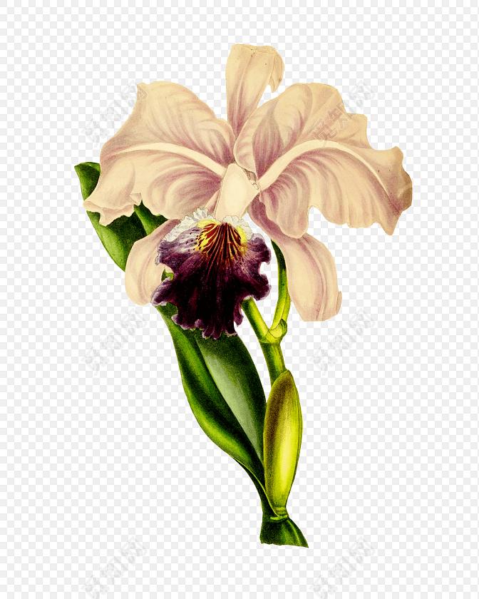 清新手绘水彩花枝设计素材