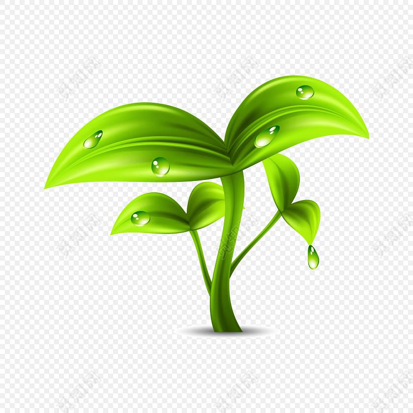 绿色小树苗矢量图