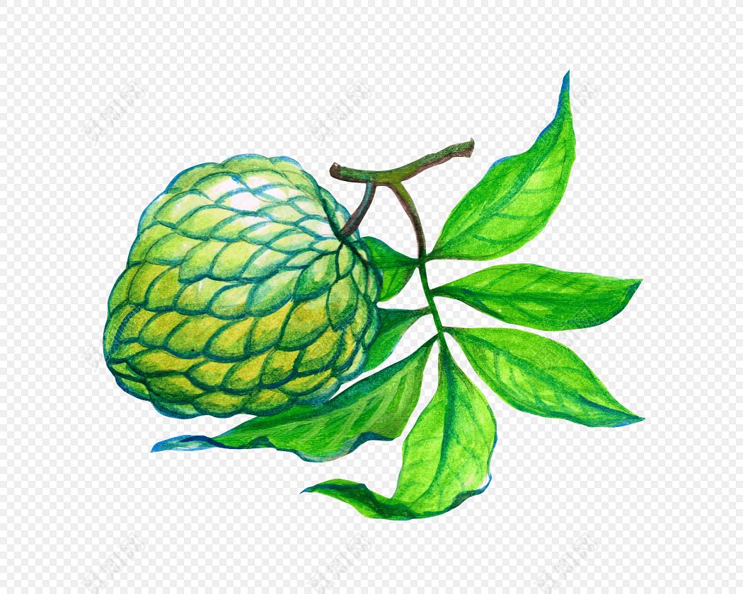 荔枝手绘图片