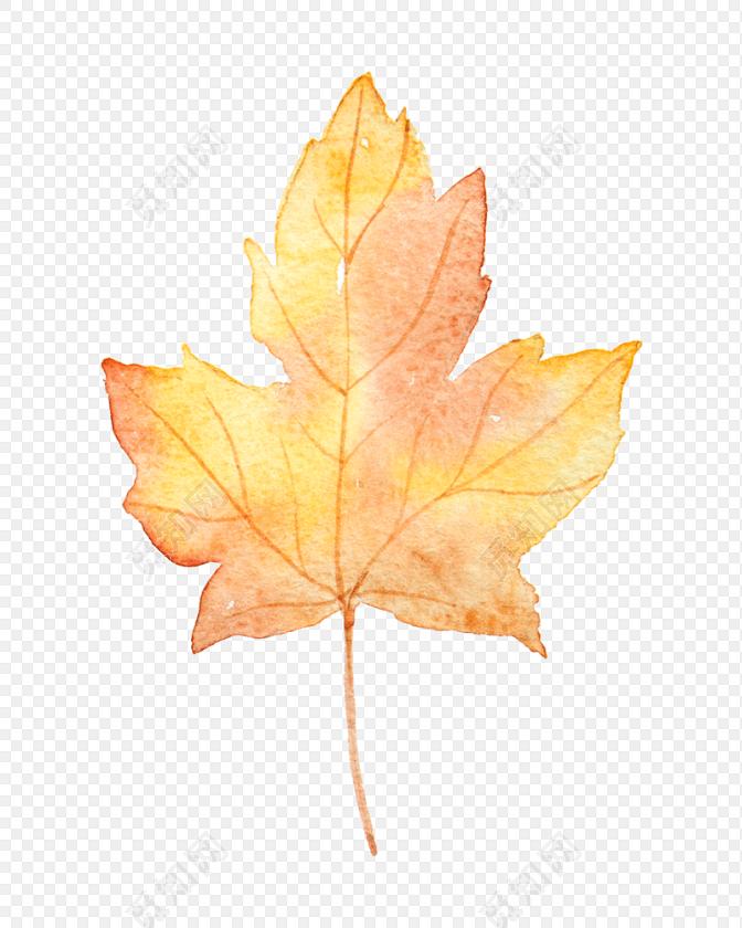彩色清新枫叶手绘水彩插画树叶素材