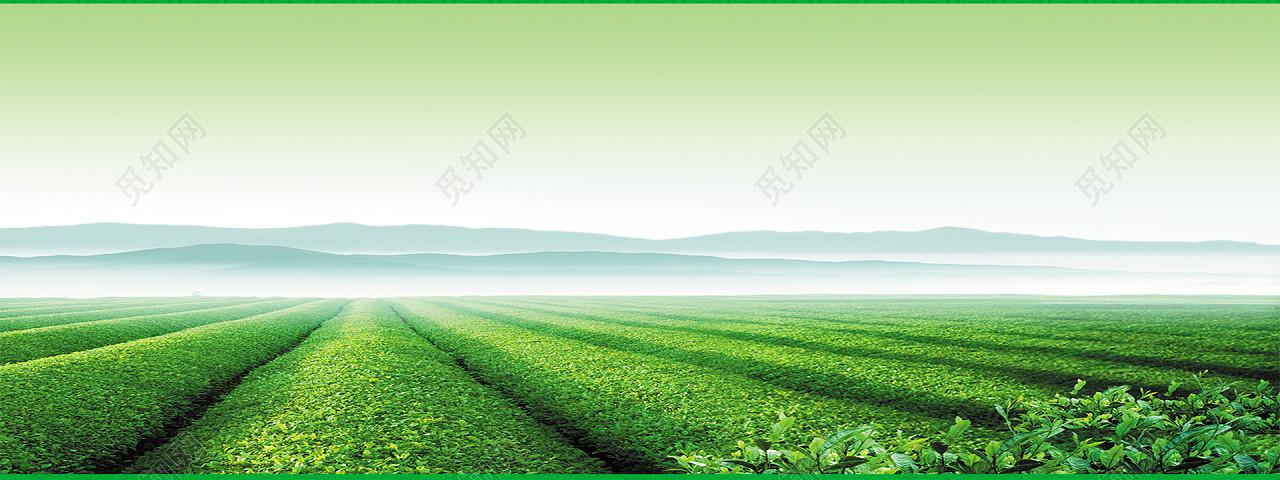 原创非商用授权 下载jpg下载psd 背景素材 茶叶广告背景海报标签:茶