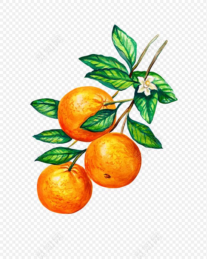 橙子水果手绘素材免费下载_png素材_觅知网