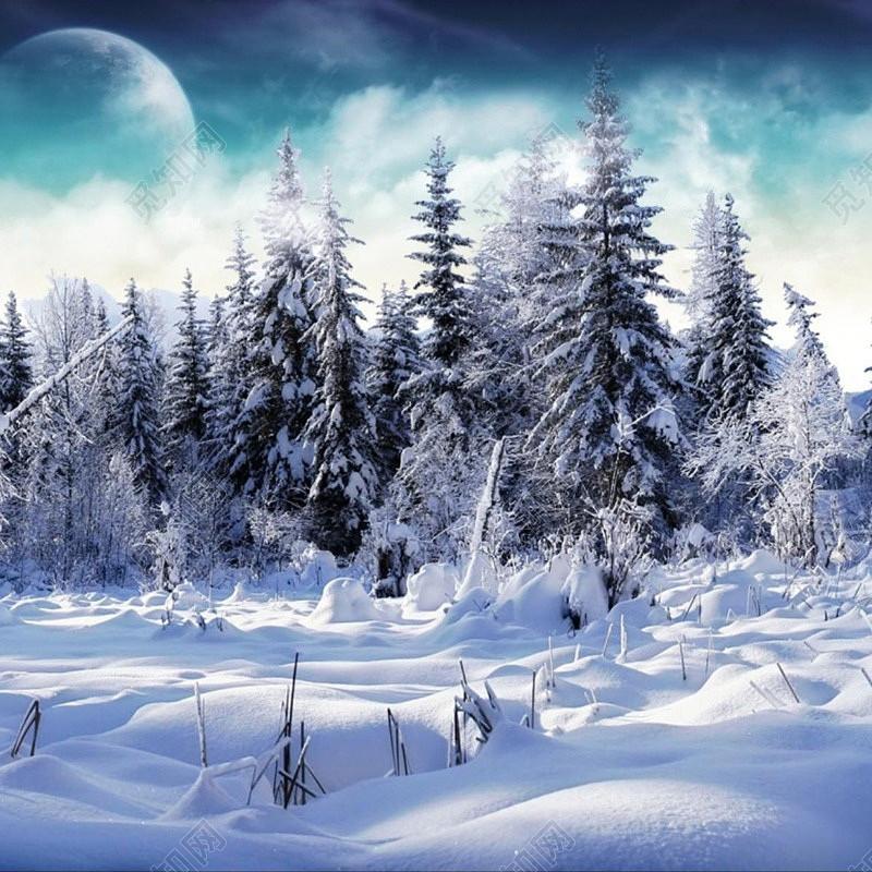 冬天树木松树雪地背景图片