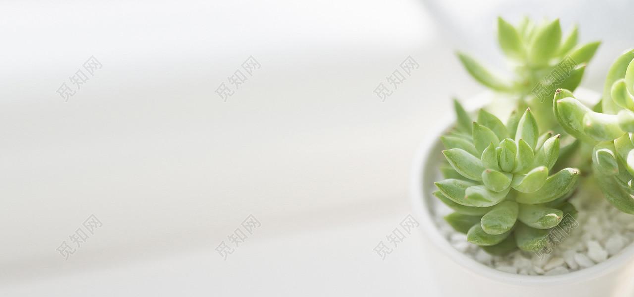 日系清新文艺阳光多肉植物淘宝背景