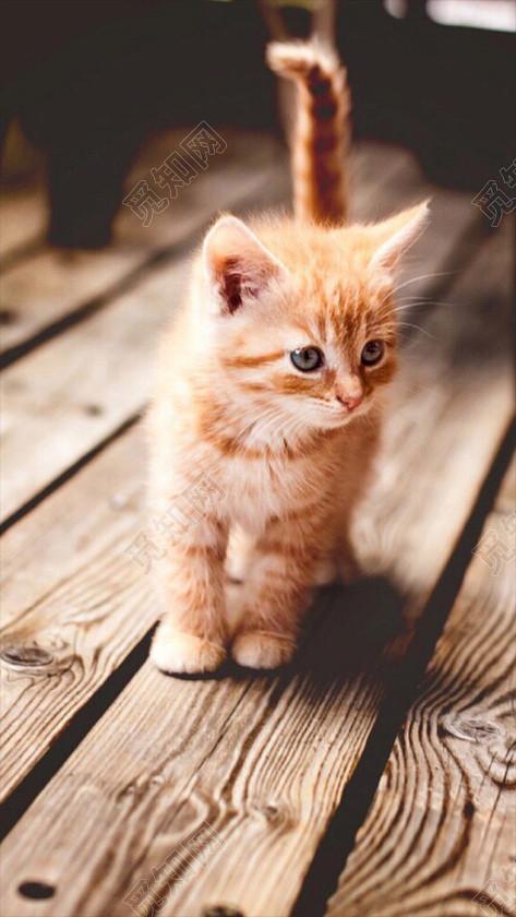 壁纸 动物 猫 猫咪 小猫 桌面 473_840 竖版 竖屏 手机