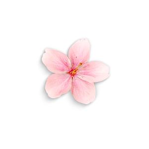 粉色桃花花瓣元素