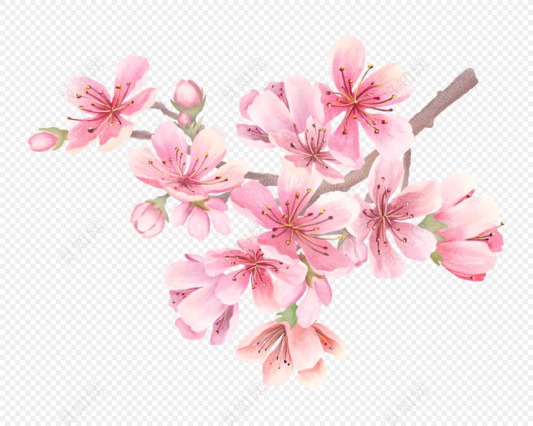 手绘粉色樱花矢量图