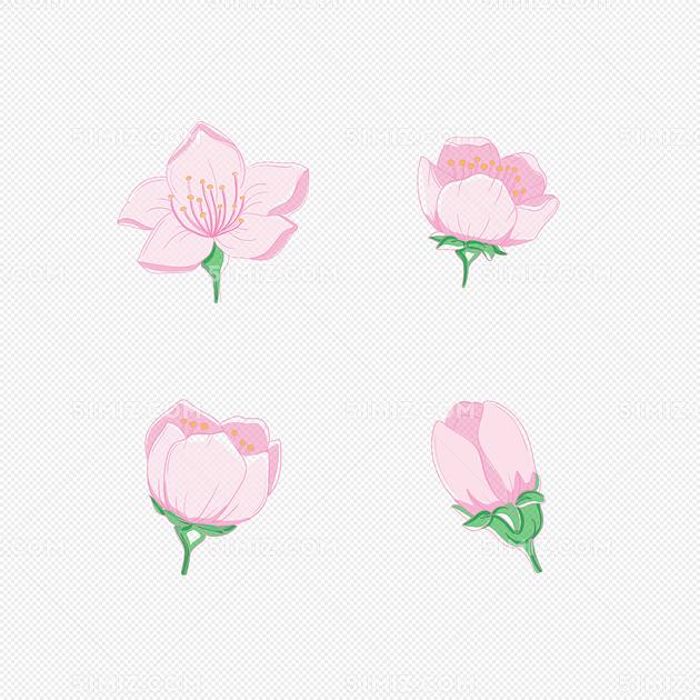 卡通手绘樱花开花过程矢量图片