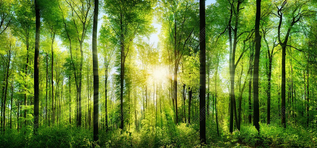 绿色梦幻森林大自然淘宝背景素材