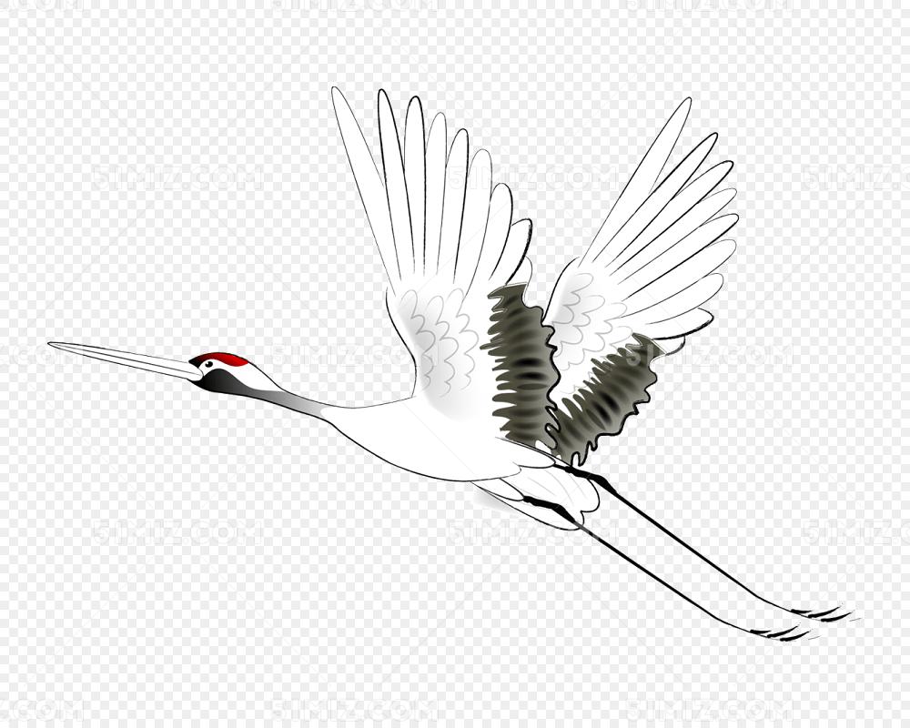 手绘飞翔的仙鹤丹顶鹤