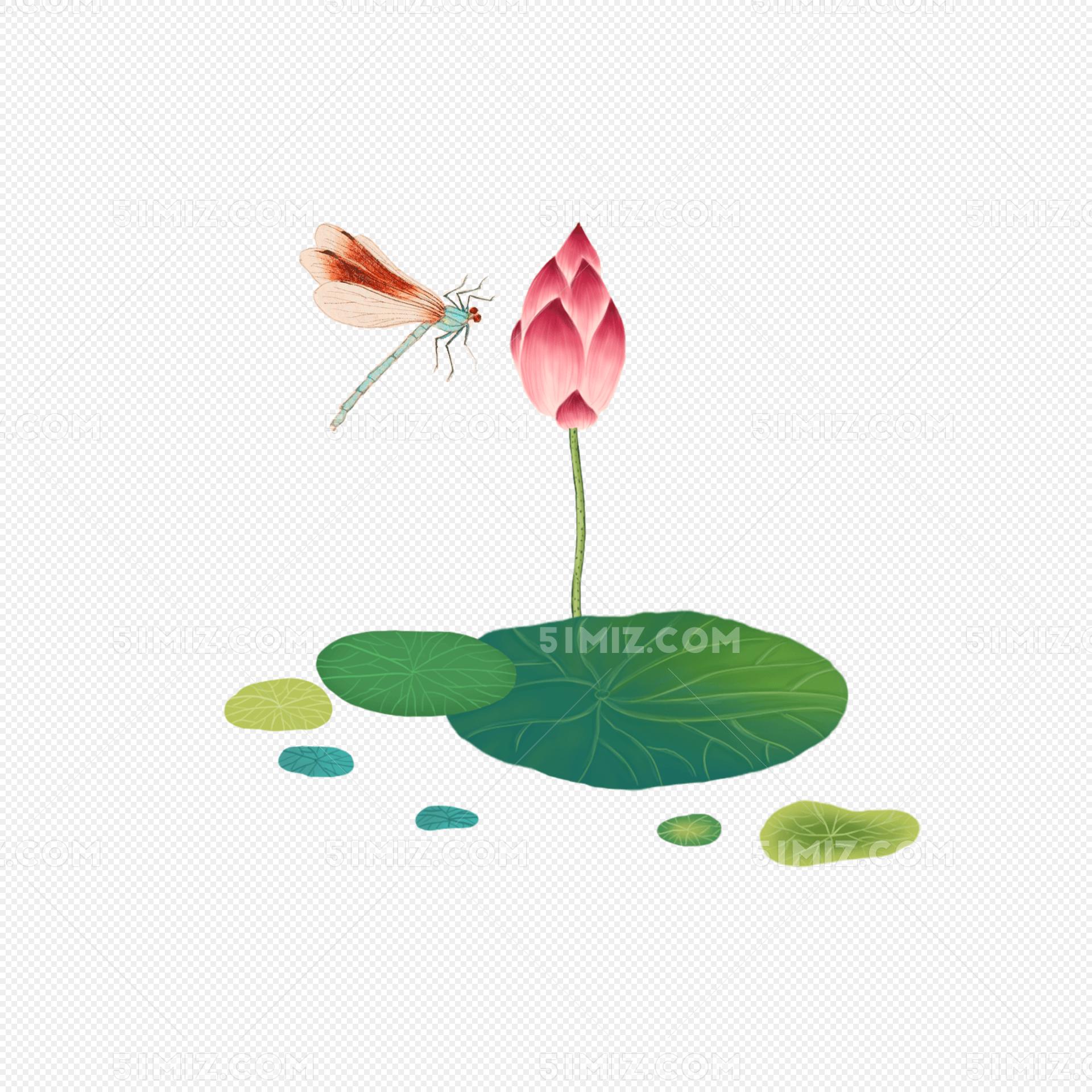 荷花和蜻蜓手绘插画