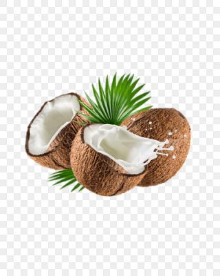 海南椰子图片_海南大全窗户_海南素材v椰子素室内装修椰子设计图片椰子图片