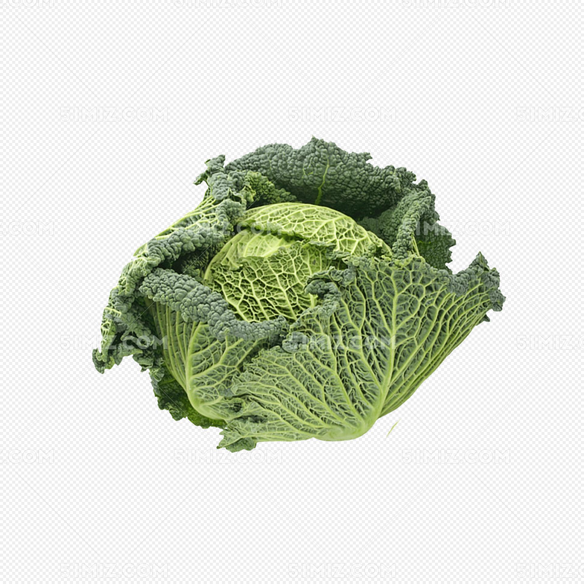 新鲜的包菜蔬菜