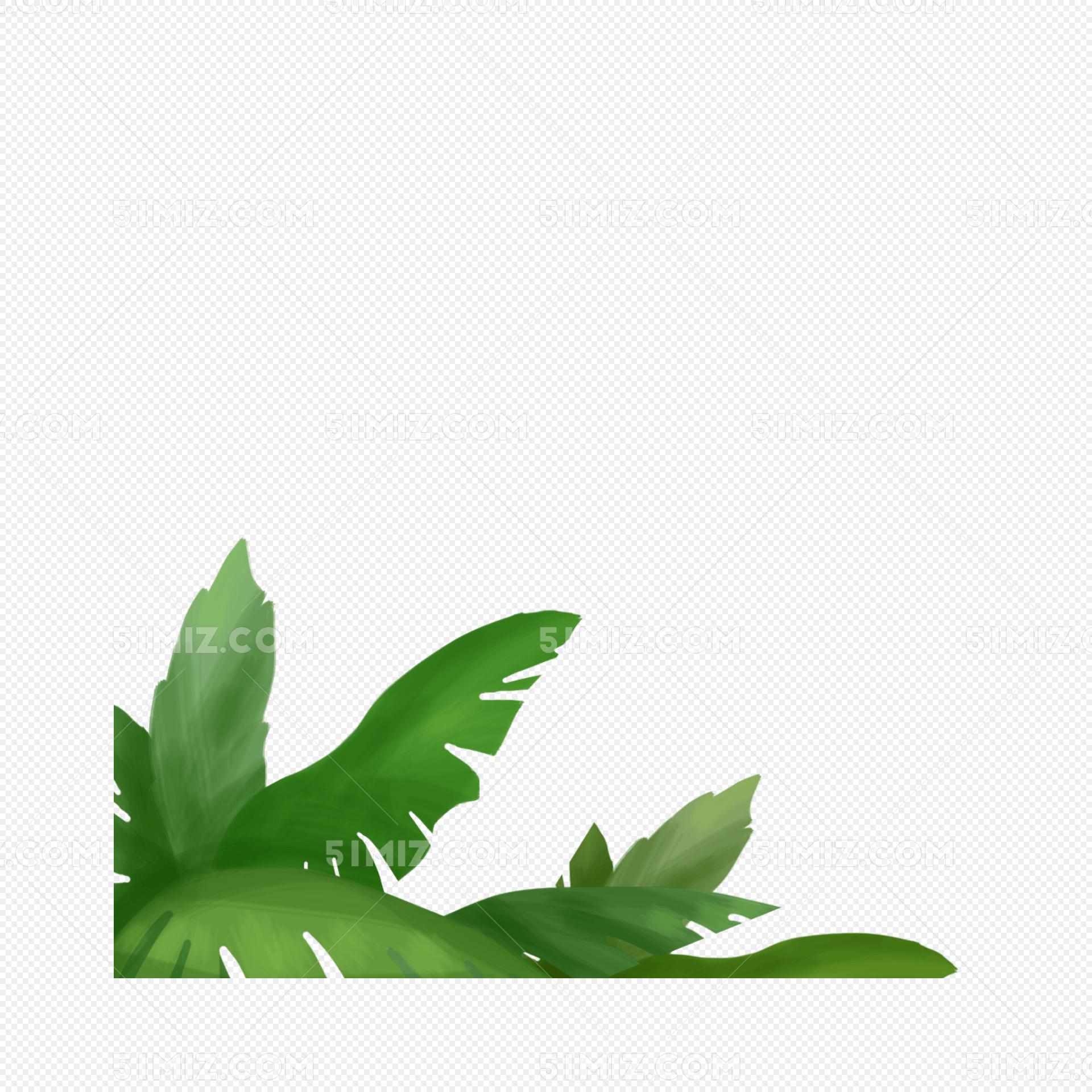 夏天手绘绿叶图片