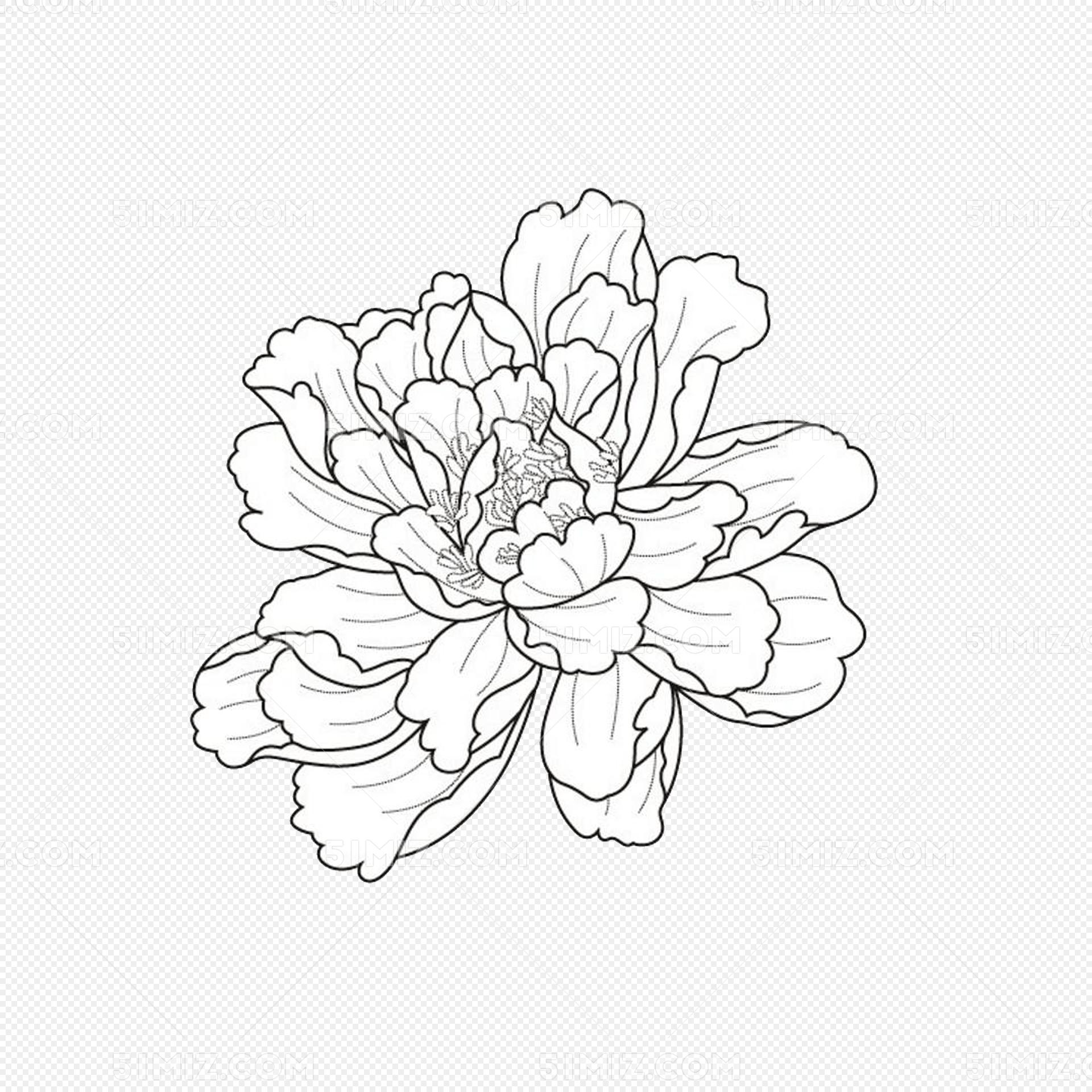 白色手绘勾线牡丹花