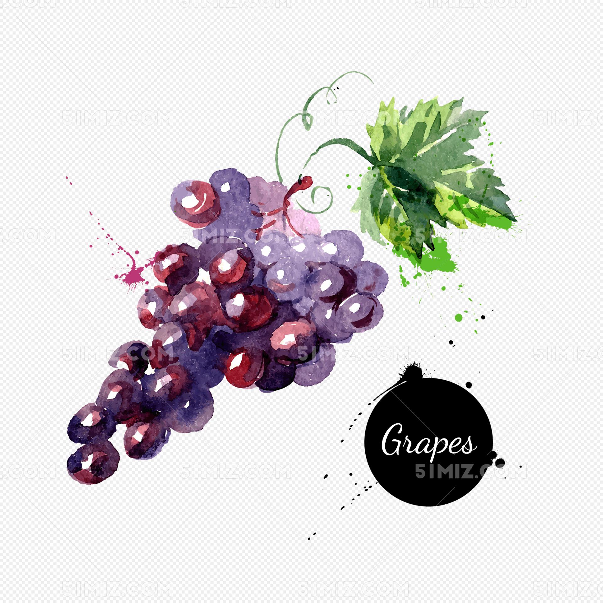 卡通手绘水彩水果葡萄