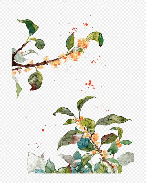 手绘桂花图片素材