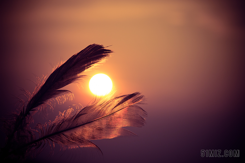 黄色风景唯美日落下羽毛特写背景图片