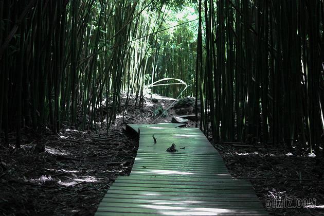 绿色摄影意境竹林中的小路摄影户外竹林背景图片
