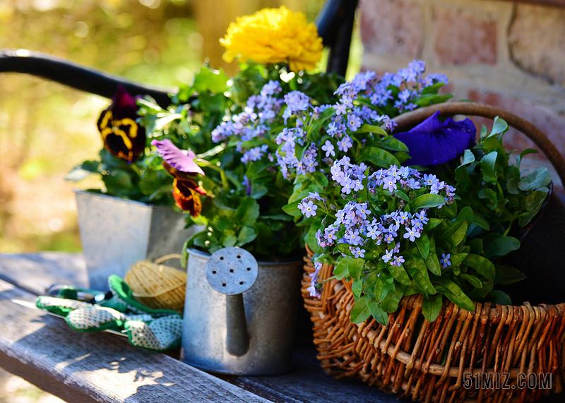 花园 鲜花 植物花 园艺 春天 不要忘了我 园丁 银行