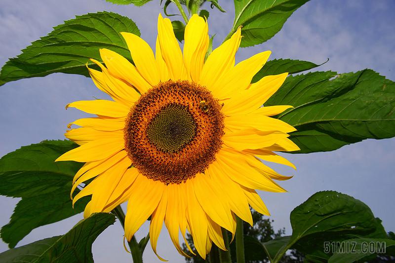 开花 太阳花 黄色 花 夏季 厂 性质 植物群 花瓣 结构