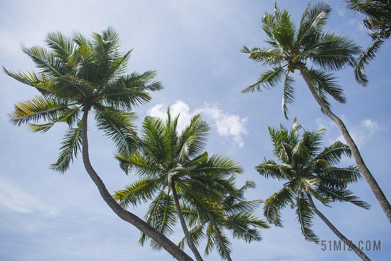 树椰子树怎样字体环形v字体ps图片